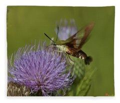 Hummingbird Or Clearwing Moth Din178 Fleece Blanket