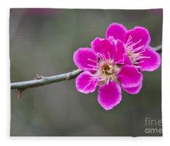 Japanese Flowering Apricot. Fleece Blanket
