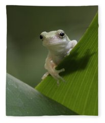 Juvenile Grey Treefrog Fleece Blanket