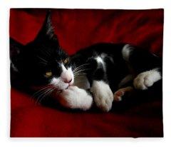 Kitten On Red Take Two Fleece Blanket