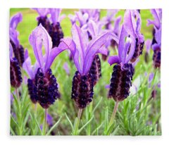 Lavenders Fleece Blanket