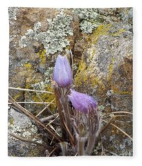 Pasque Flowers Fleece Blanket