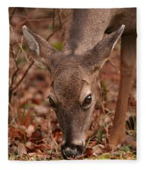 Portrait Of  Browsing Deer Two Fleece Blanket