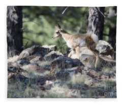 Pronghorn Antelope Fawn Fleece Blanket
