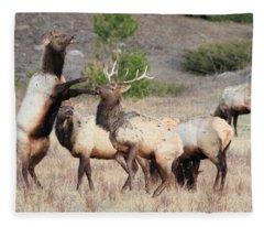 Put Up Your Dukes Fleece Blanket
