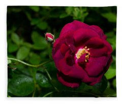 Red Rose In The Wild Fleece Blanket