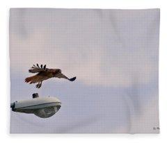 Red-tailed Hawk In Flight Fleece Blanket