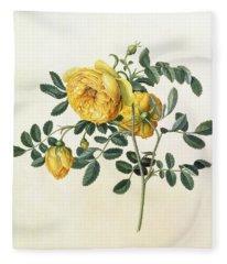 Rosa Hemispherica Fleece Blanket