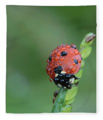 Seven-spotted Lady Beetle On Grass With Dew Fleece Blanket