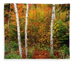 Shelburne Birches 2 Fleece Blanket