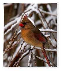 Snowbirds--cardinal Dsb025 Fleece Blanket