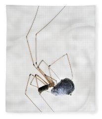Spider Wrapping Fly Fleece Blanket