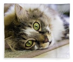 Tabby Cat Looking At Camera Fleece Blanket