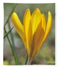 Yellow Crocus In Spring Fleece Blanket