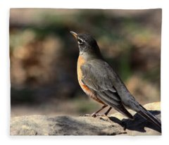 American Robin On Rock Fleece Blanket