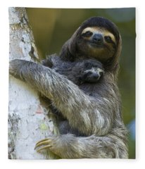 Brown-throated Three-toed Sloth Fleece Blanket