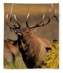 Bull Elk Cervus Elaphus Wild Wyoming Fleece Blanket