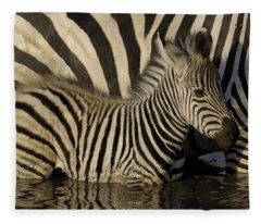 Burchells Zebra Equus Burchellii Foal Fleece Blanket