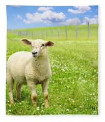 Cute Young Sheep Fleece Blanket
