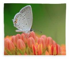 Eastern Tailed Blue On Butterfly Weed Fleece Blanket
