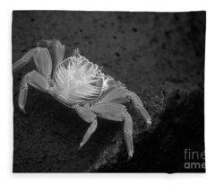 Galapagos_19-15 Fleece Blanket