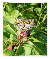 Grasshopper Love Fleece Blanket