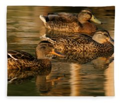 Mallards Swimming In The Water At Magic Hour Fleece Blanket