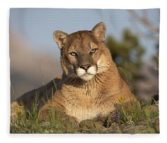 Mountain Lion Portrait North America Fleece Blanket