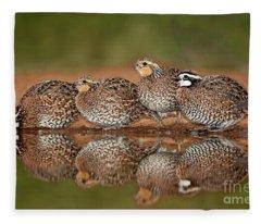 Northern Bobwhites Colinus Virginianus Wild Texas Fleece Blanket