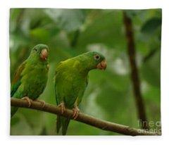 Orange -chinned Parakeets  Fleece Blanket