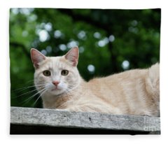 Orange Tabby Fleece Blanket