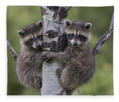 Raccoon Two Babies Climbing Tree North Fleece Blanket