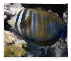 Red Sea Sailfin Tang  Fleece Blanket