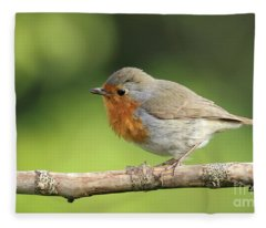 Robin Fleece Blanket
