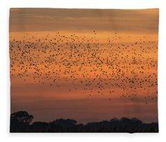 Sunset Starlings  Fleece Blanket