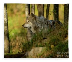 Timber Wolf In Forest Fleece Blanket