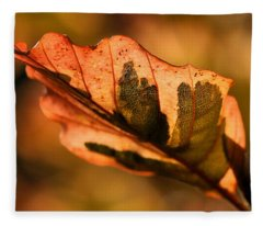 Tri-color Beech In Autumn Fleece Blanket