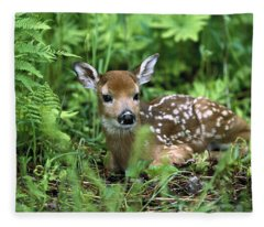 White-tailed Deer Odocoileus Fleece Blanket
