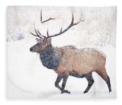 Winter Bull Fleece Blanket
