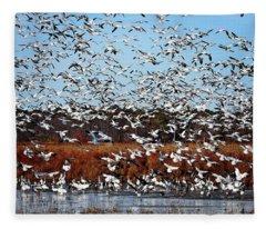 Wintering Snow Geese Fleece Blanket