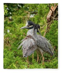 Yellow-crowned Night Heron Fleece Blanket