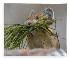 Pika With A Mouthful  Fleece Blanket