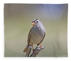 White-crowned Sparrow Fleece Blanket