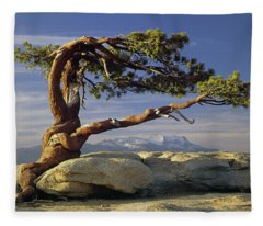 1m6701 Historic Jeffrey Pine Sentinel Dome Yosemite Fleece Blanket