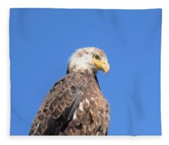Bald Eagle Juvenile Perched Fleece Blanket