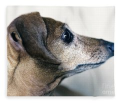 Brownie The Dachshund Fleece Blanket