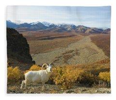 Dalls Sheep In Denali Fleece Blanket