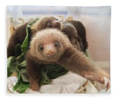 Hoffmanns Two-toed Sloth Choloepus Fleece Blanket