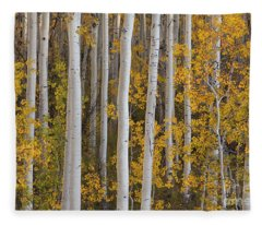 Quaking Aspens In Autumn Fleece Blanket