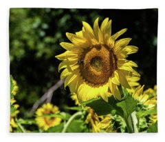 Sunflowers In Bloom Fleece Blanket
